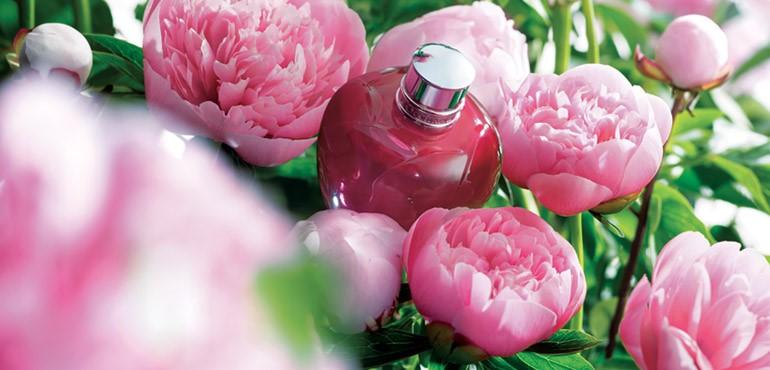 Belleza a flor de piel. Novedades en cosmética botánica