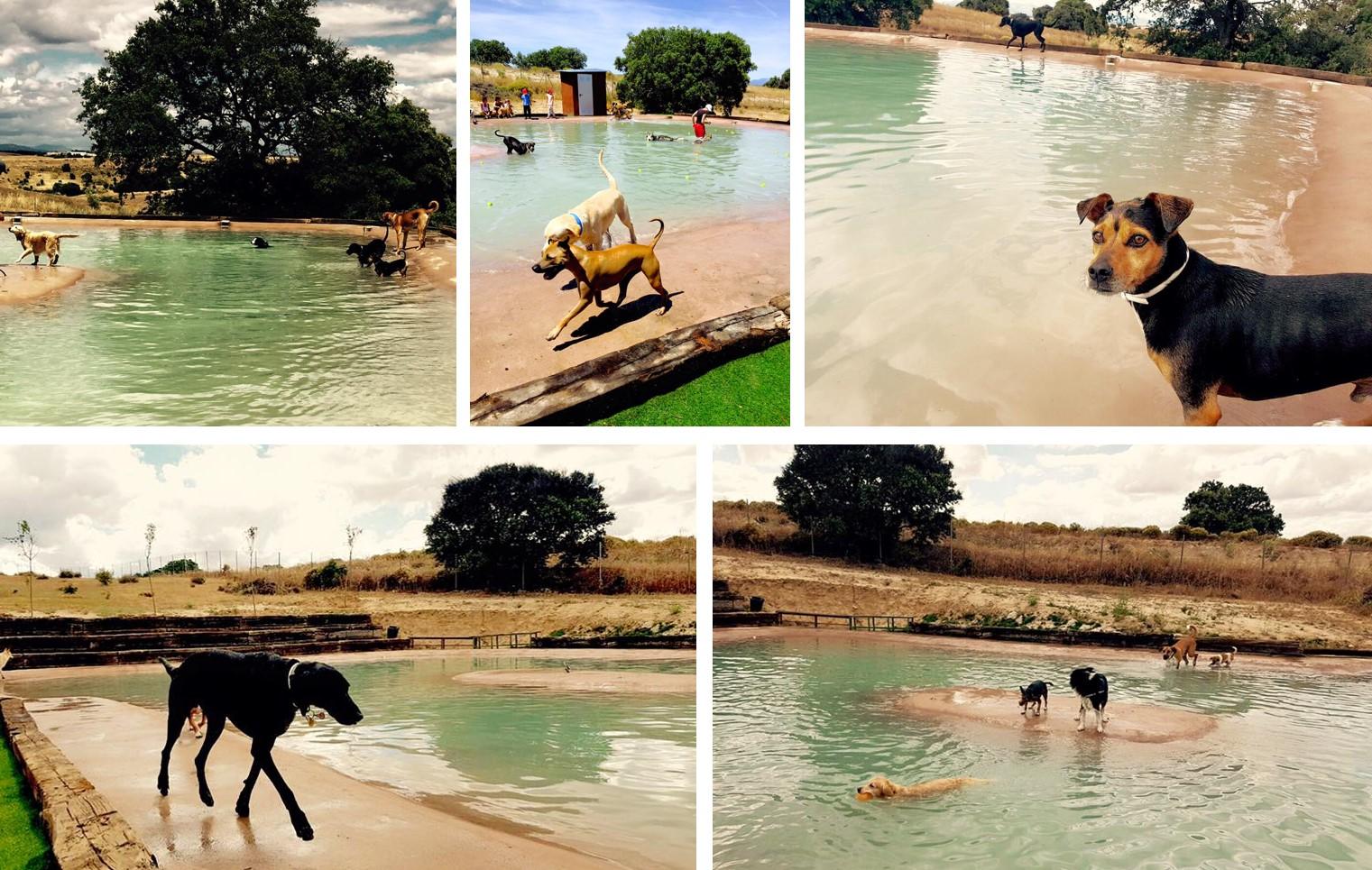 Campus perruno, piscina para perros en Madrid