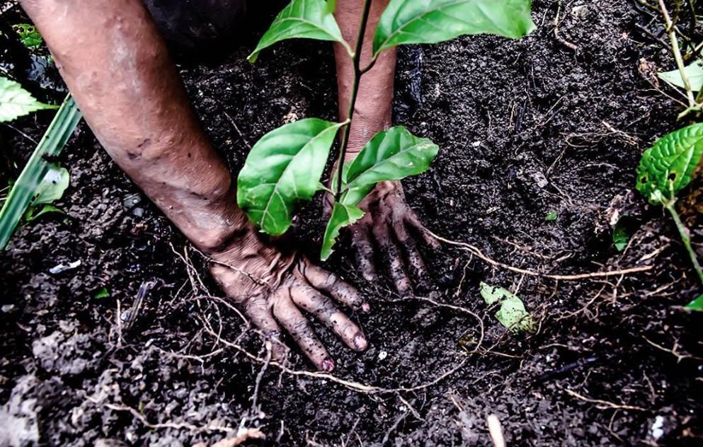 reforestacion one oak selva amazónica peruana